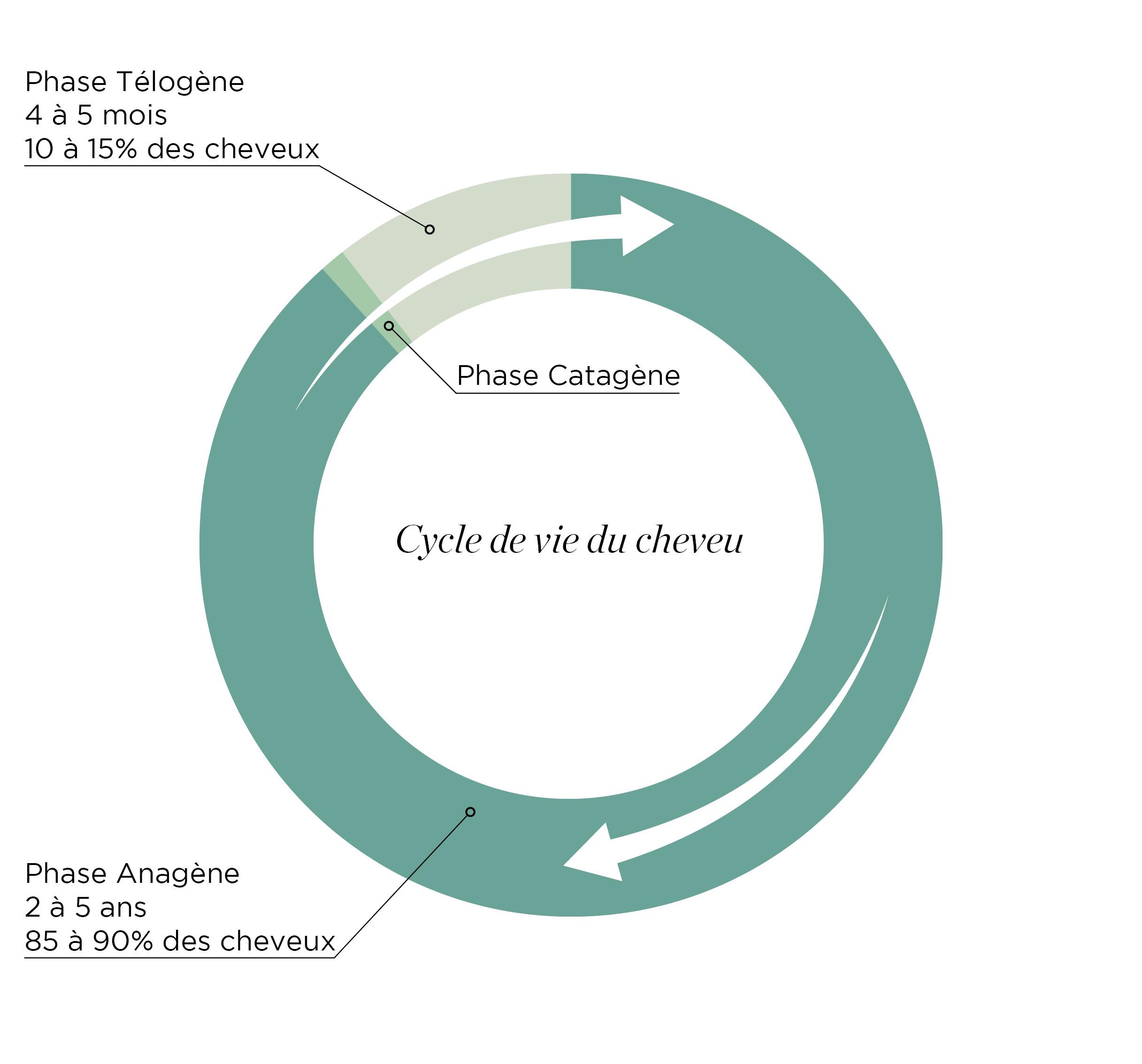 Le cycle du cheveu - Keranat™ - Diminuer la chute de cheveux